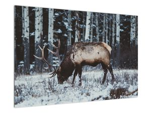Obraz - jeleň v zime (V020179V9060)