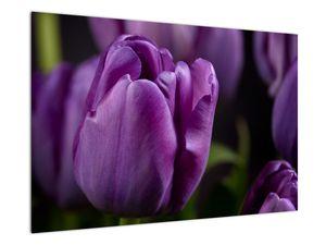 Obraz květů tulipánů (V020215V9060)