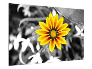 Obraz žluté květiny (V020361V9060)