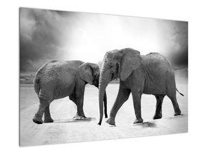 Obraz - černobílí sloni (V020398V9060)
