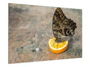 Obraz motýla (V020454V9060)