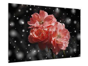 Obraz růžové květiny (V020471V9060)