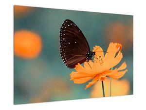 Obraz - motýl na oranžové květině (V020577V9060)