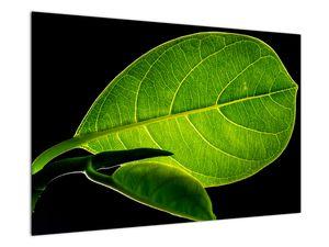 Obraz - zelený list (V020628V9060)