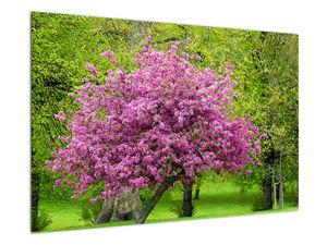 Obraz rozkvetlého stromu na louce (V020654V9060)
