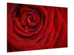 Obraz - detail růže (V020684V9060)
