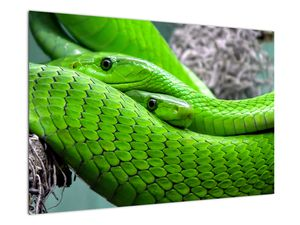 Obraz zelených hadů (V020689V9060)