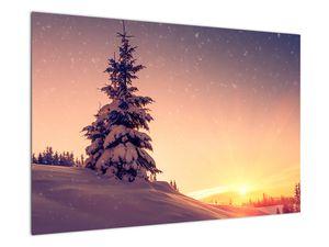 Obraz zasněženého stromu na louce (V020701V9060)