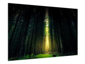 Obraz temného lesa (V020705V9060)
