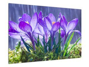 Obraz květin v dešti (V020707V9060)
