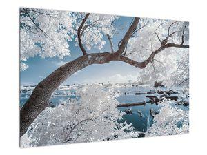 Obraz zasněženého stromu u vody (V020718V9060)