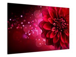 Obraz červené kvety (V020807V9060)