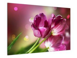 Obraz růžových tulipánů (V020887V9060)