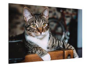 Obraz kočky (V020889V9060)
