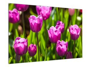Obraz tulipánov na lúke (V020893V9060)