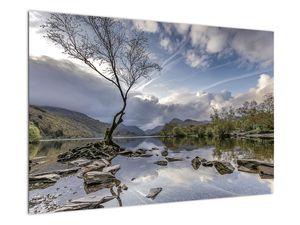 Obraz řeky se stromem (V020917V9060)