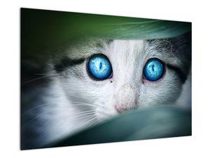Obraz kočky (V020944V9060)