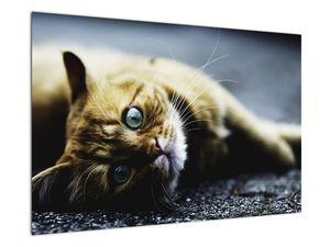 Obraz kočky (V020963V9060)