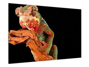 Obraz chameleona na větvi (V021125V9060)