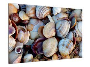 Kagyló képe (V021131V9060)