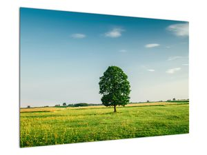 Obraz stromu na louce (V021171V9060)