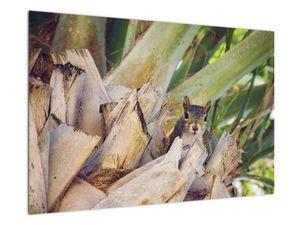 Obraz veverky na stromu (V021177V9060)