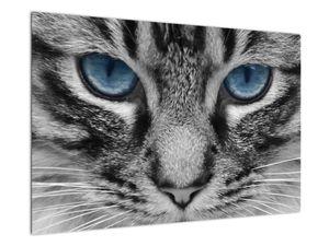 Obraz kočky (V021221V9060)
