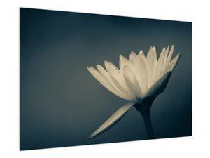 Obraz květiny (V021223V9060)