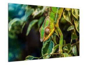 Obraz chameleona (V021236V9060)