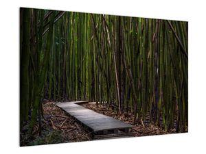 Obraz - Medzi bambusy (V021324V9060)