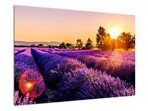 Obraz levandulového pole, Provence (V021590V9060)