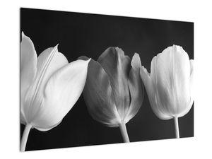 Kép - fekete-fehér tulipán virág (V021916V9060)
