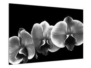 Obraz květu orchideje (V022015V9060)