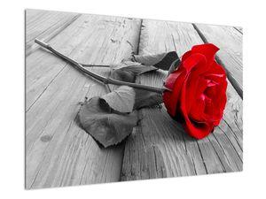 Slika crvene ruže (V022288V9060)