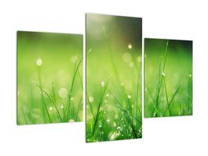 Obraz - rosa na trávě (V020169V90603PCS)