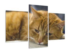 Obraz mačky (V020192V90603PCS)