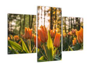 Kép - tulipánok (V020195V90603PCS)