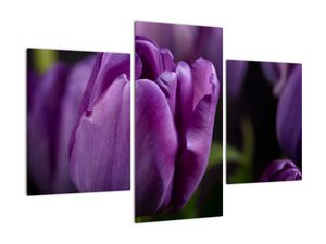 Obraz květů tulipánů (V020215V90603PCS)