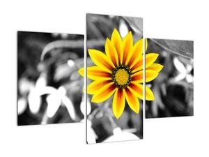 Obraz žluté květiny (V020361V90603PCS)