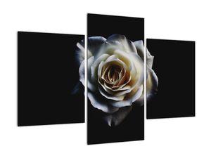Obraz bílé růže (V020370V90603PCS)