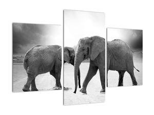 Obraz - černobílí sloni (V020398V90603PCS)