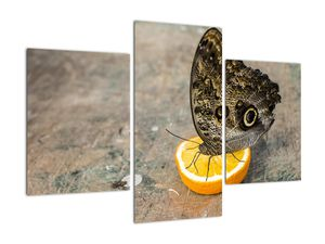 Obraz motýla (V020454V90603PCS)
