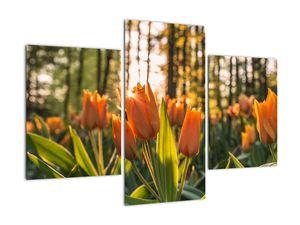 Obraz - oranžové tulipány (V020552V90603PCS)