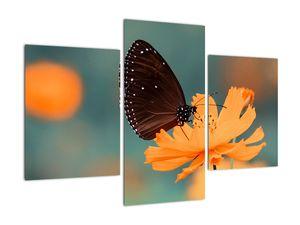 Obraz - motýl na oranžové květině (V020577V90603PCS)