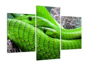 Obraz zelených hadů (V020689V90603PCS)