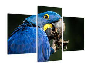 Obraz papouška (V020714V90603PCS)
