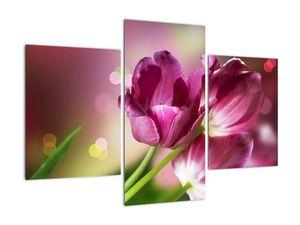 Obraz růžových tulipánů (V020887V90603PCS)