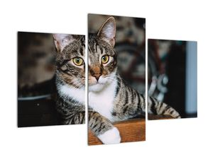 Obraz kočky (V020889V90603PCS)