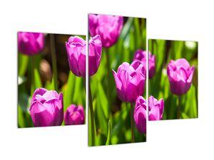 Obraz tulipánov na lúke (V020893V90603PCS)