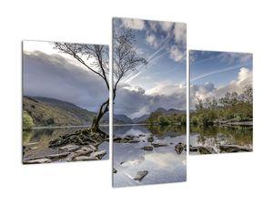 Obraz řeky se stromem (V020917V90603PCS)